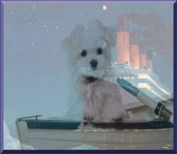 dogs_on_titanic