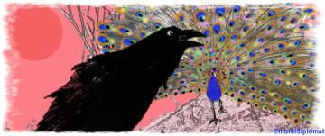 peacock_crow