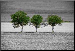3_trees
