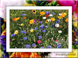 wild_flowers_on_a_bus