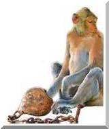 monkey_trap1