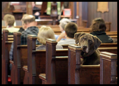 churchdog