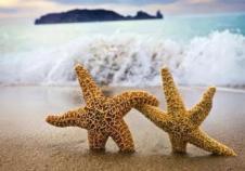 star_fish