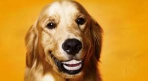 teeth_dog_1