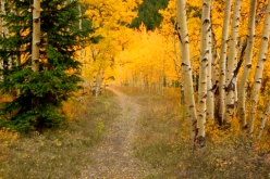 This trail takes you through a splendid aspen forest near the ghost town of Ashcroft, near Aspen, Colorado. I loved how the light seemed to dance ahead of me, drawing me onward along the trail. Taken 2008.