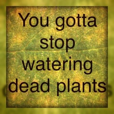 dead-plants7
